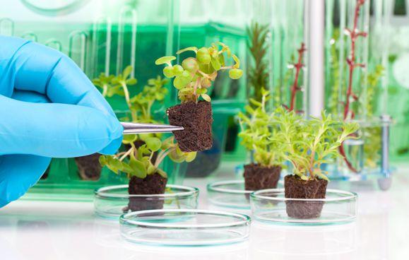 plantas-vitro